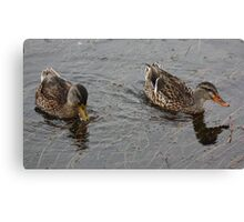 Yellow Bill Orange Bill Canvas Print