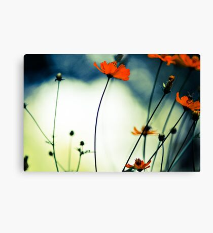 In the sunshine, she's dancing...Sold 14 Jan., 2 Feb 2012 & 31May2013, Got 6 Featured Works Canvas Print