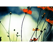 In the sunshine, she's dancing...Sold 14 Jan., 2 Feb 2012 & 31May2013, Got 6 Featured Works Photographic Print