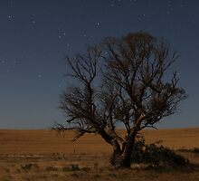 Night Tree by sedge808