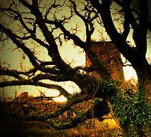 Tree in Wales 2 by Jasper Glaspie