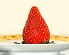  Succulent Strawberry by Margie Avellino
