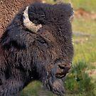 Grump Bull by JamesA1