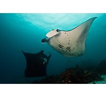 Dancing Manta's Photographic Print