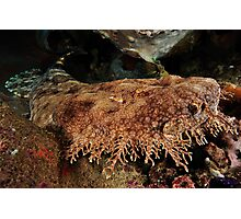 Ornate Wobbegong Shark Photographic Print