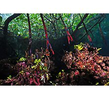 In The Mangroves Photographic Print