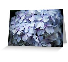 Hydrangea Up Close and Personal Greeting Card