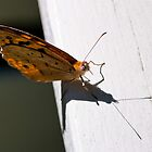 Butterfly on a Handrail by Ben Cordia