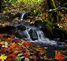 I Fell For You by Charles & Patricia   Harkins ~ Picture Oregon