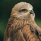 Power Bird II by Katayoonphotos