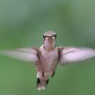 Hummingbird In Flight by daphsam
