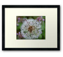 Dandelion Seeds - Blow Framed Print