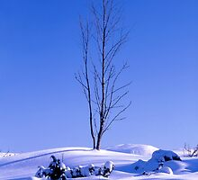 Lonely tree in winter by Ingvar Bjork Photography