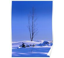 Lonely tree in winter Poster