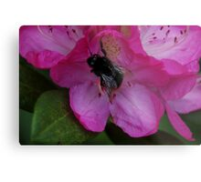Bumble Bee on flower Metal Print