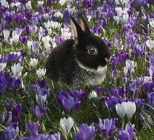 Spring Bunny - iPhone by Andrew Bret Wallis