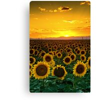 Golden August Canvas Print