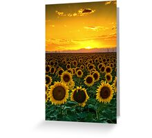 Golden August Greeting Card