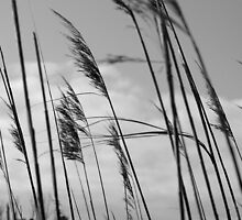 Grasses by Robin Lee