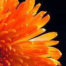 Orange Mum by Robin Black