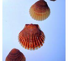 Seashells by Robin Lee