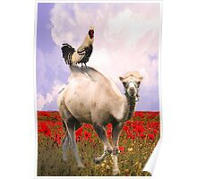 Rooster Prince, the Camel and the Poppy Field! Poster