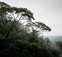 View from a hanging bridge - Costa Rica by Robert Kelch, M.D.