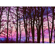 Setting Sun Shines Through The Trees Photographic Print