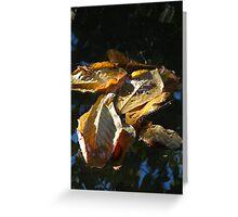 Leaves - Hojas Greeting Card