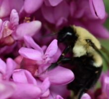 Bumble Bee in Redbud Sticker
