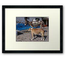 I'm More Photogenic Than This Donkey - Estoy Mas Fotogénico Que Este Burro Framed Print