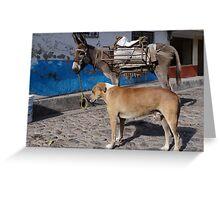 I'm More Photogenic Than This Donkey - Estoy Mas Fotogénico Que Este Burro Greeting Card