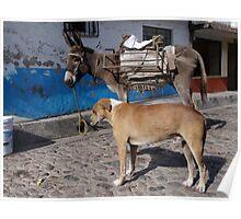 I'm More Photogenic Than This Donkey - Estoy Mas Fotogénico Que Este Burro Poster