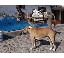 I'm More Photogenic Than This Donkey - Estoy Mas Fotogénico Que Este Burro Photographic Print