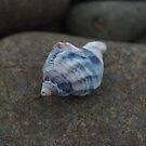 shore still life by lukasdf