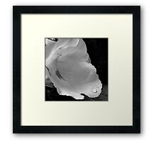 Droplet on a white flower Framed Print