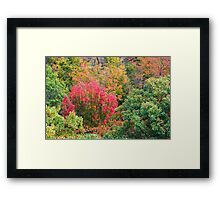 Close up view of red, green and yellow-colored fall trees Framed Print