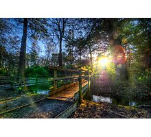 Forest Flare Photographic Print