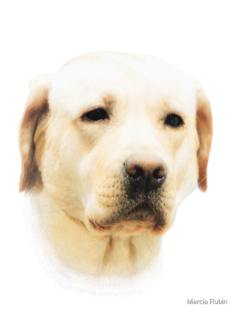 Yellow Labrador by Marcia Rubin