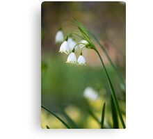 Lily of the walley Canvas Print