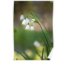 Lily of the walley Poster