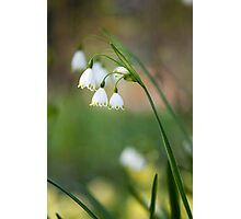 Lily of the walley Photographic Print