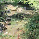 Bridge View - Hamilton Gardens by shoshanah