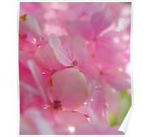 pink tones in spring.. Poster