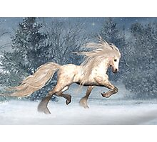 Winter Storm .. the stallions tale Photographic Print