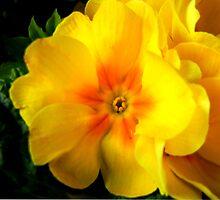 Yellow Glow by dasiygirl