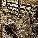 Old Fence by Sandy Dunn