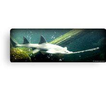 Deep sea enemy Canvas Print