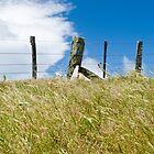 rural skyline by Anne Scantlebury