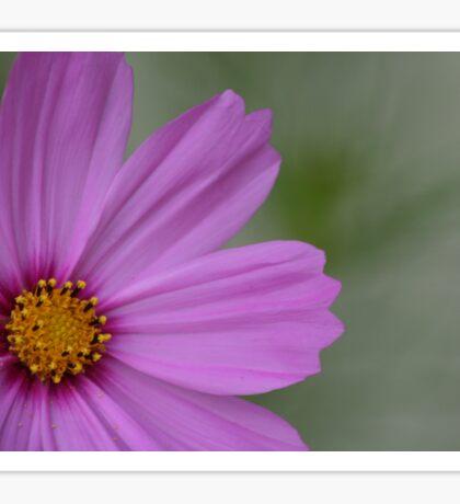 FLOWERSCAPES PINK Sticker